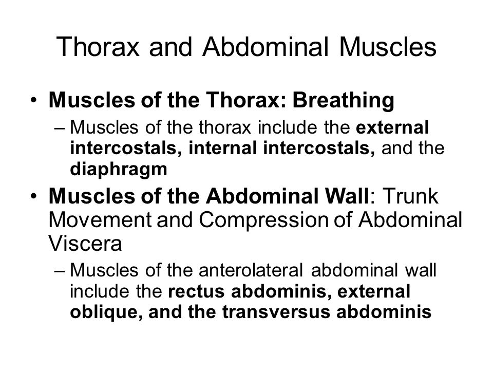 Thorax and Abdominal Muscles