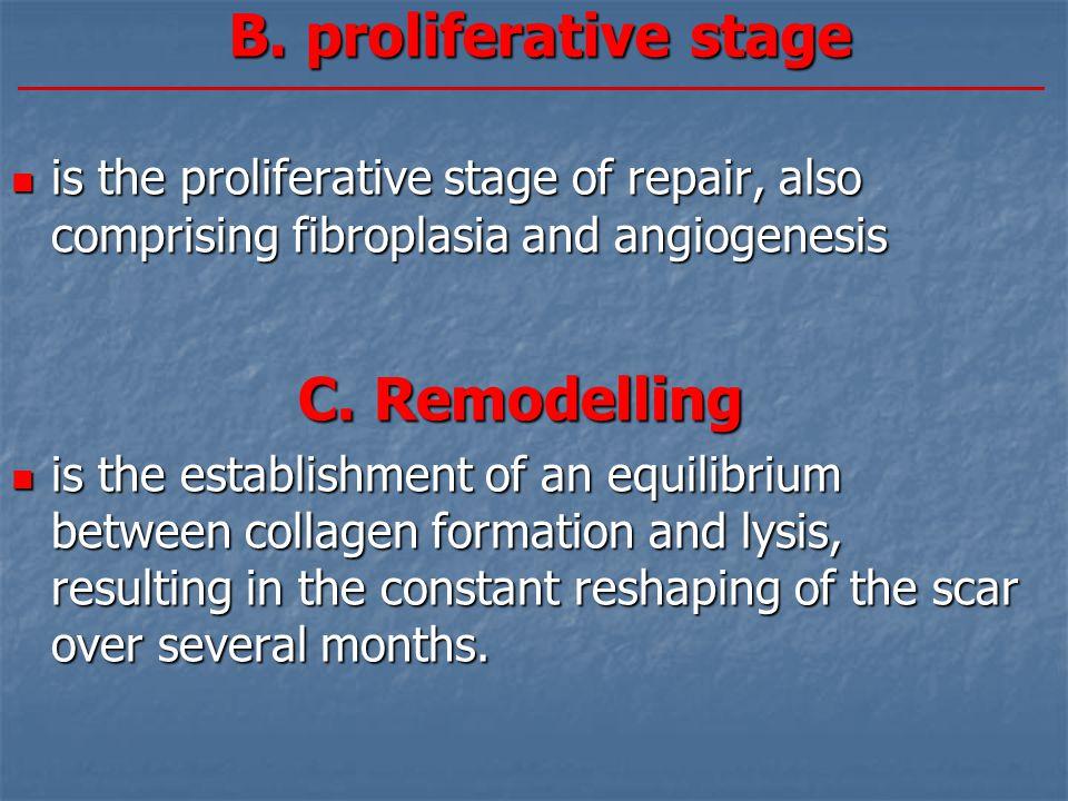 B. proliferative stage C. Remodelling