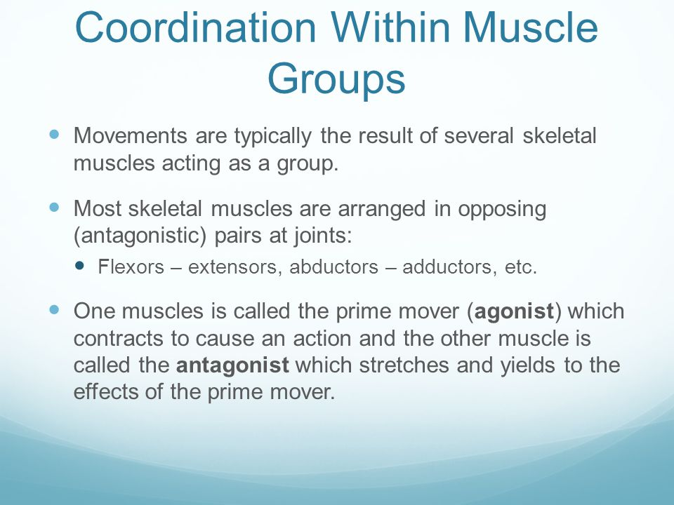 Coordination Within Muscle Groups