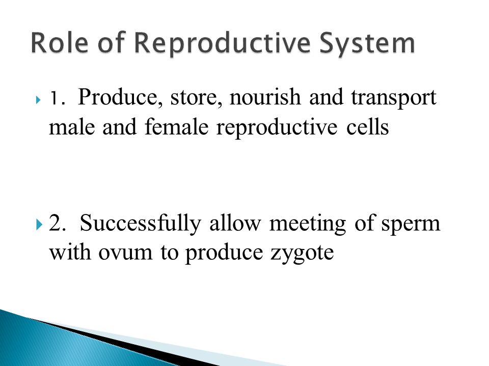 Role of Reproductive System