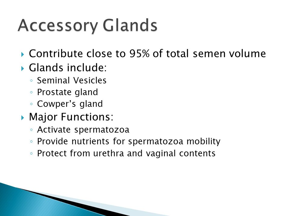 Accessory Glands Contribute close to 95% of total semen volume
