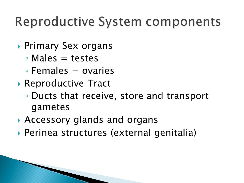 Reproductive System components