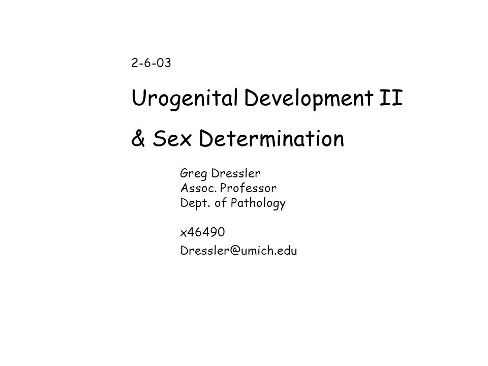 Urogenital Development II & Sex Determination