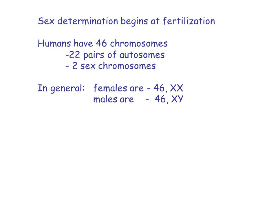 Sex determination begins at fertilization