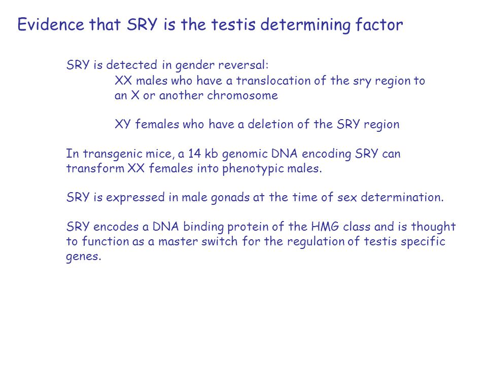 Evidence that SRY is the testis determining factor