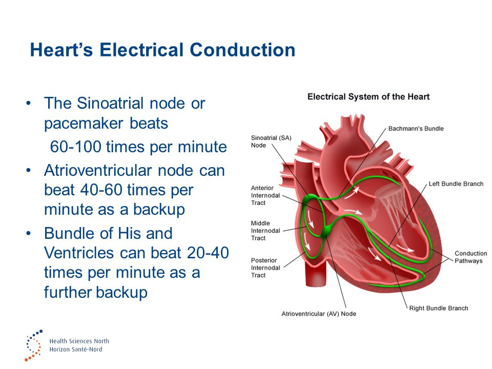Heart's Electrical Conduction