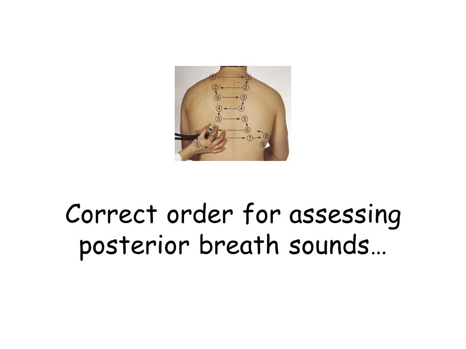 Correct order for assessing posterior breath sounds…