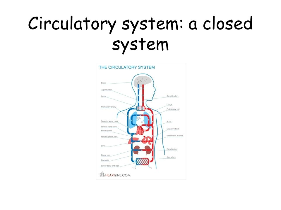 Circulatory system: a closed system