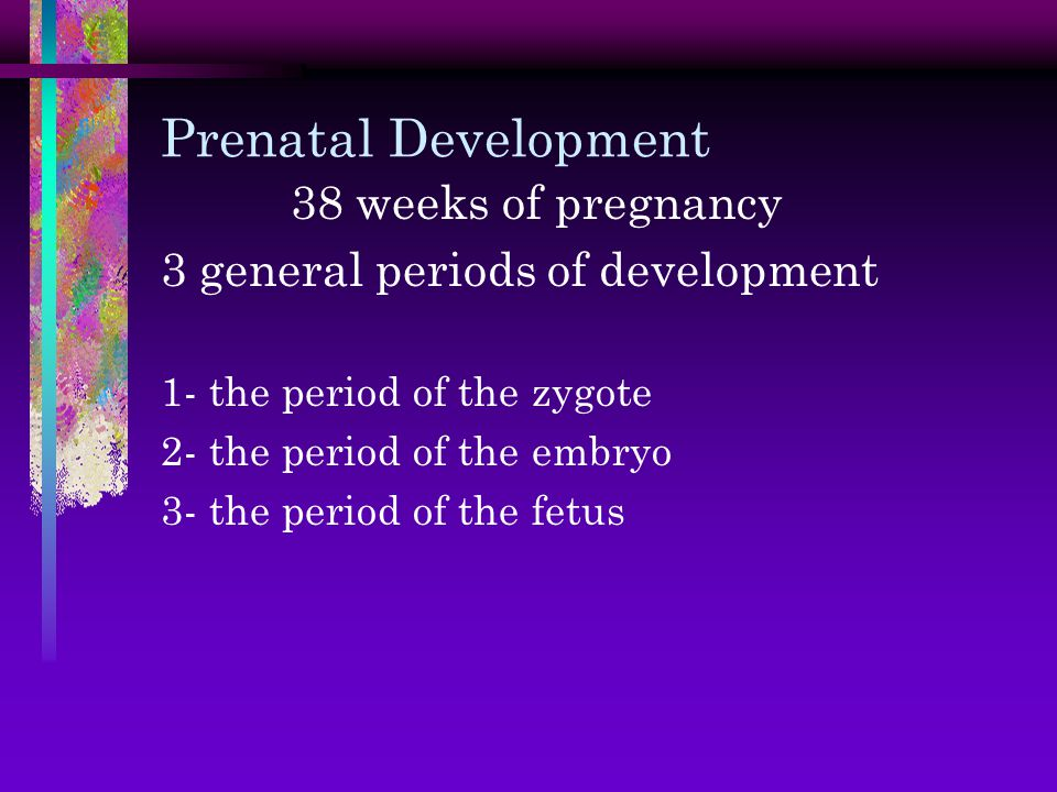 Prenatal Development 38 weeks of pregnancy