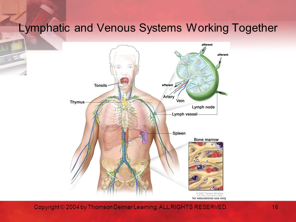 Lymphatic and Venous Systems Working Together