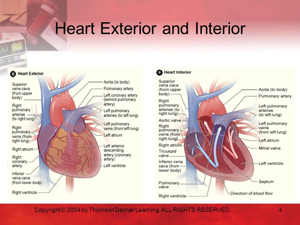Heart Exterior and Interior