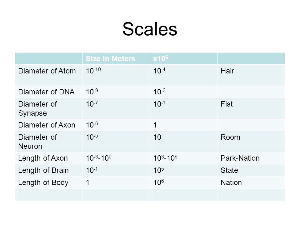 Scales Size in Meters x106 Diameter of Atom 10-10 10-4 Hair