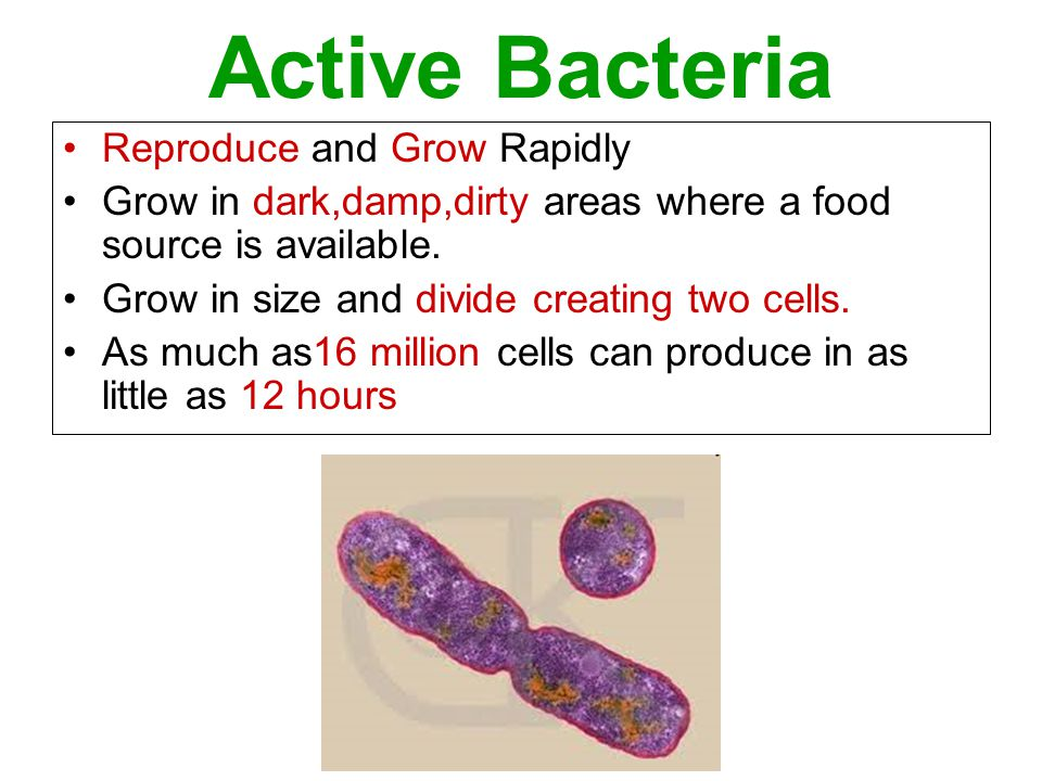 Active Bacteria Reproduce and Grow Rapidly