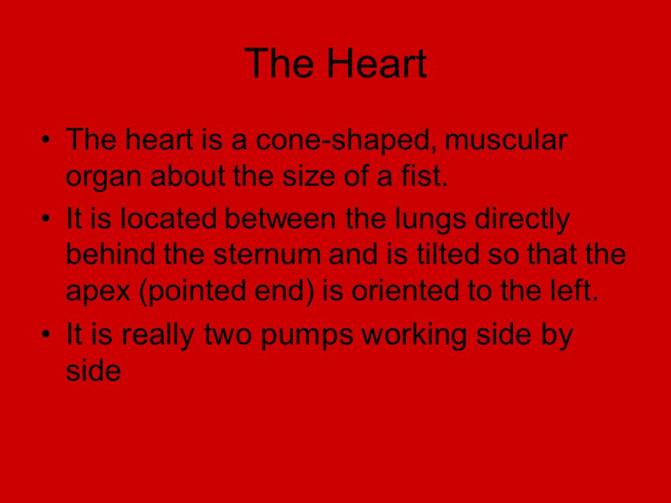The Heart It is really two pumps working side by side