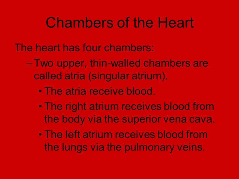 Chambers of the Heart The heart has four chambers: