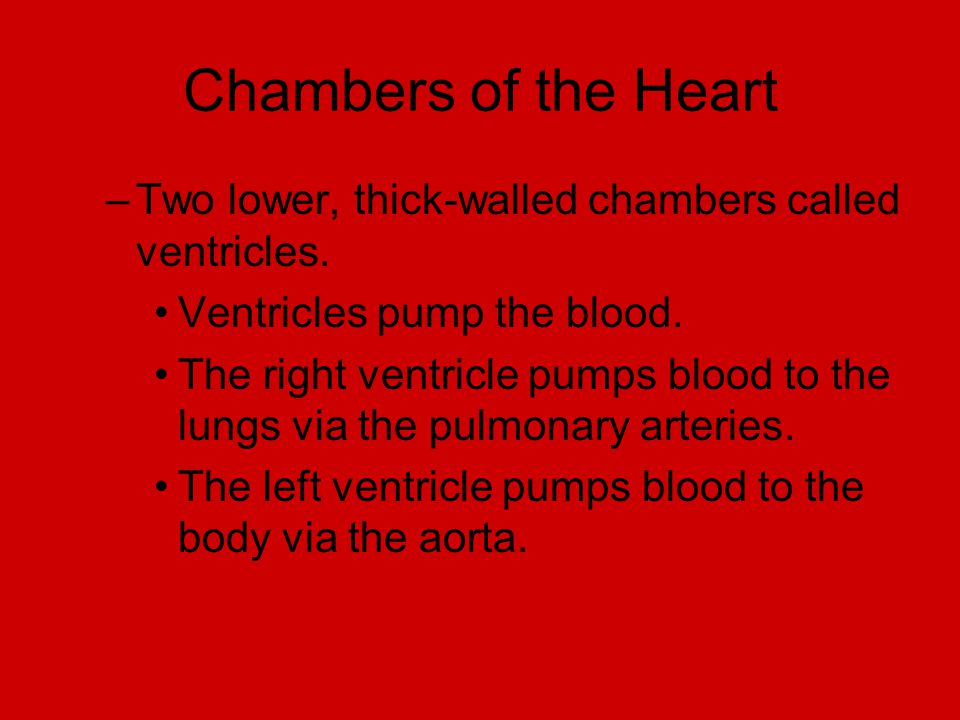 Chambers of the Heart Two lower, thick-walled chambers called ventricles. Ventricles pump the blood.