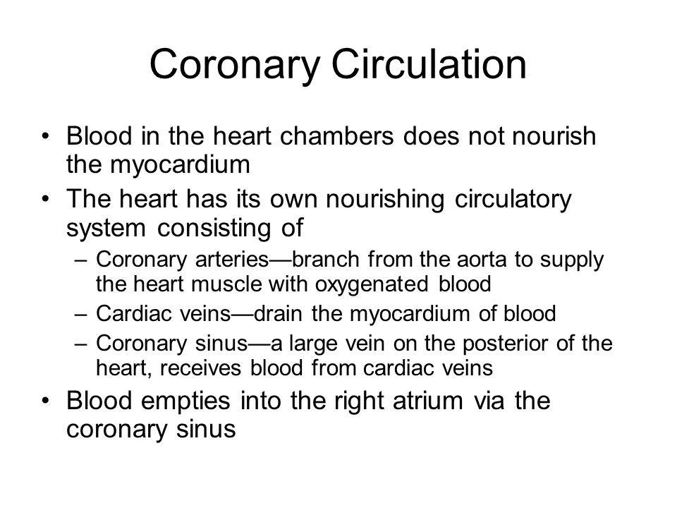 Coronary Circulation Blood in the heart chambers does not nourish the myocardium. The heart has its own nourishing circulatory system consisting of.