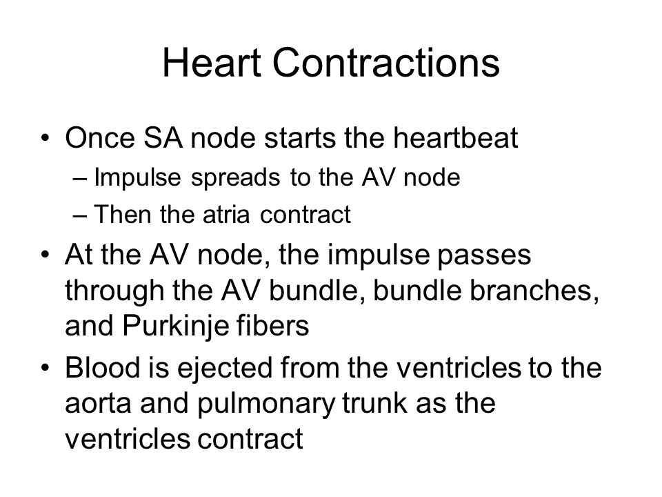 Heart Contractions Once SA node starts the heartbeat