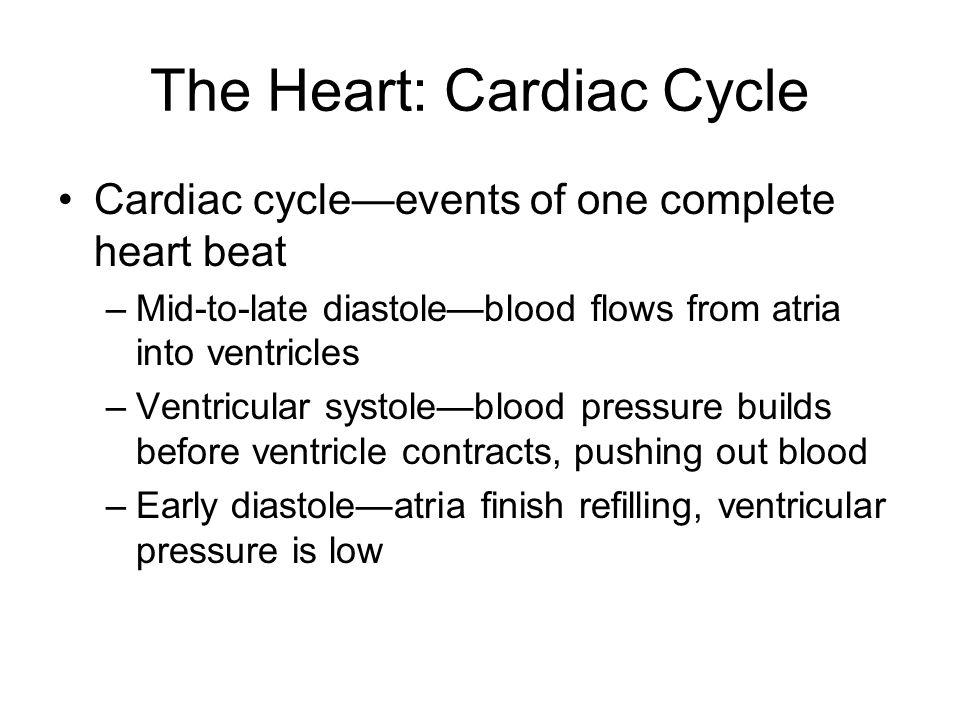 The Heart: Cardiac Cycle