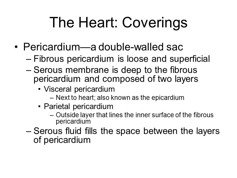 The Heart: Coverings Pericardium—a double-walled sac