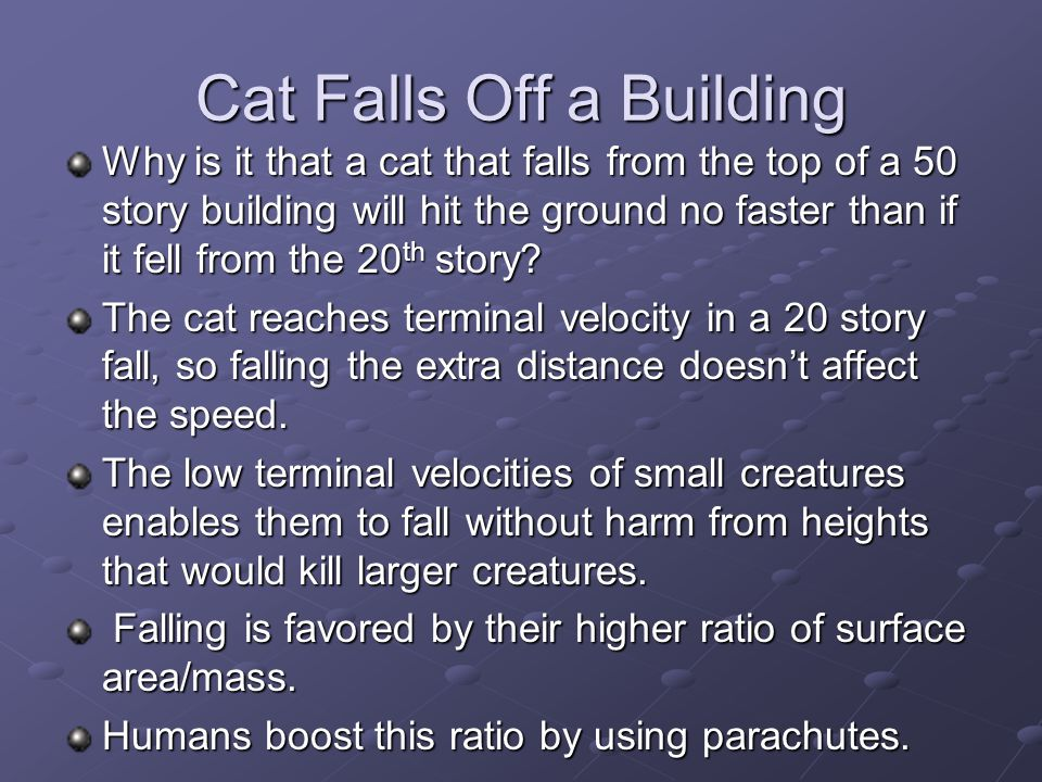 Cat Falls Off a Building