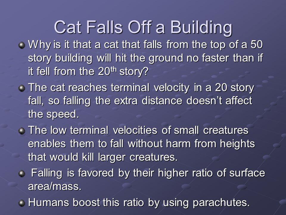 Cat Falls Off a Building