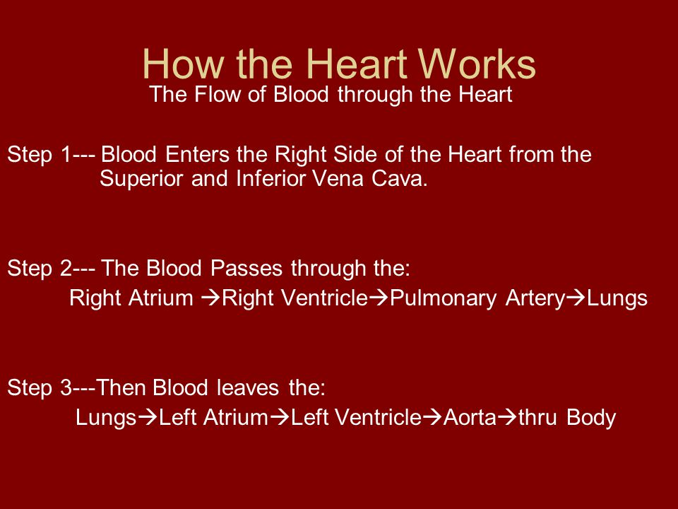 The Flow of Blood through the Heart