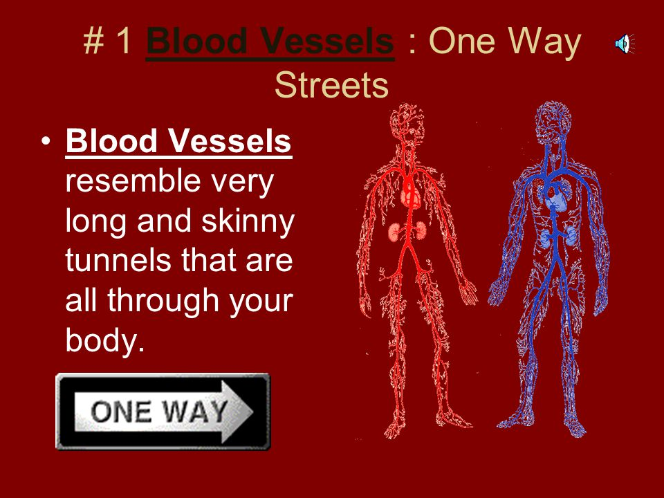 # 1 Blood Vessels : One Way Streets