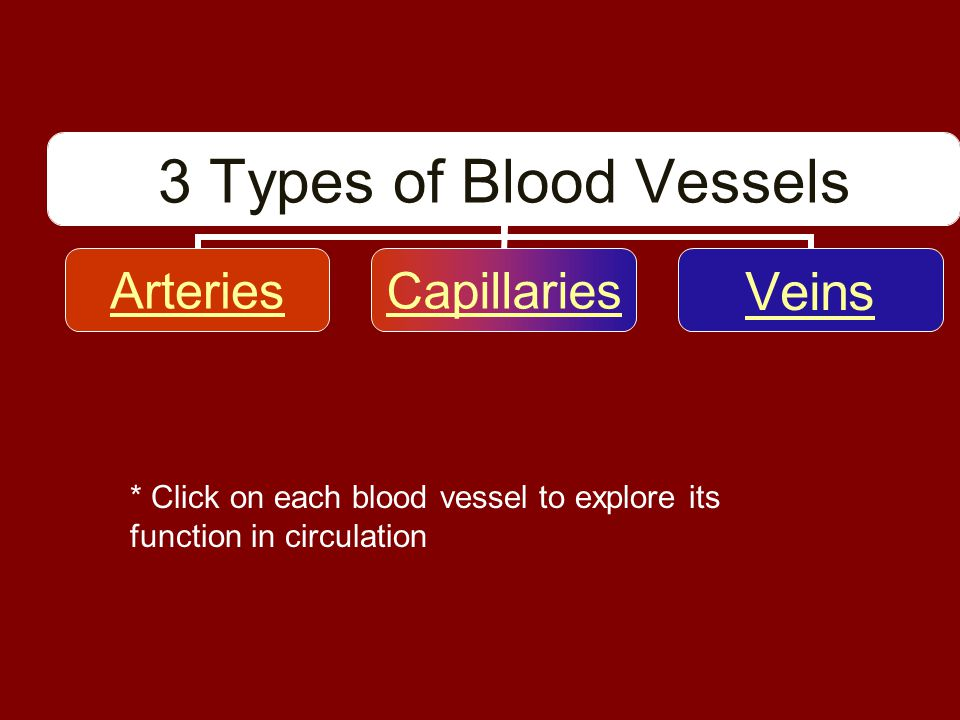 * Click on each blood vessel to explore its function in circulation