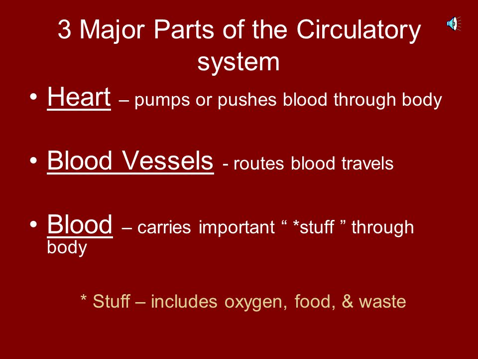 3 Major Parts of the Circulatory system