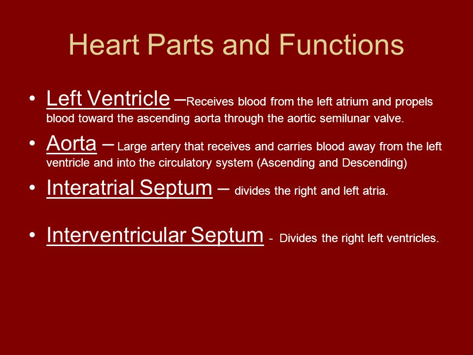 Heart Parts and Functions