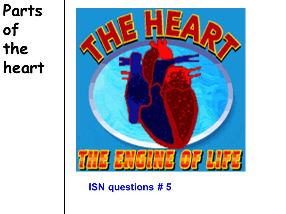 Parts of the heart ISN questions # 5