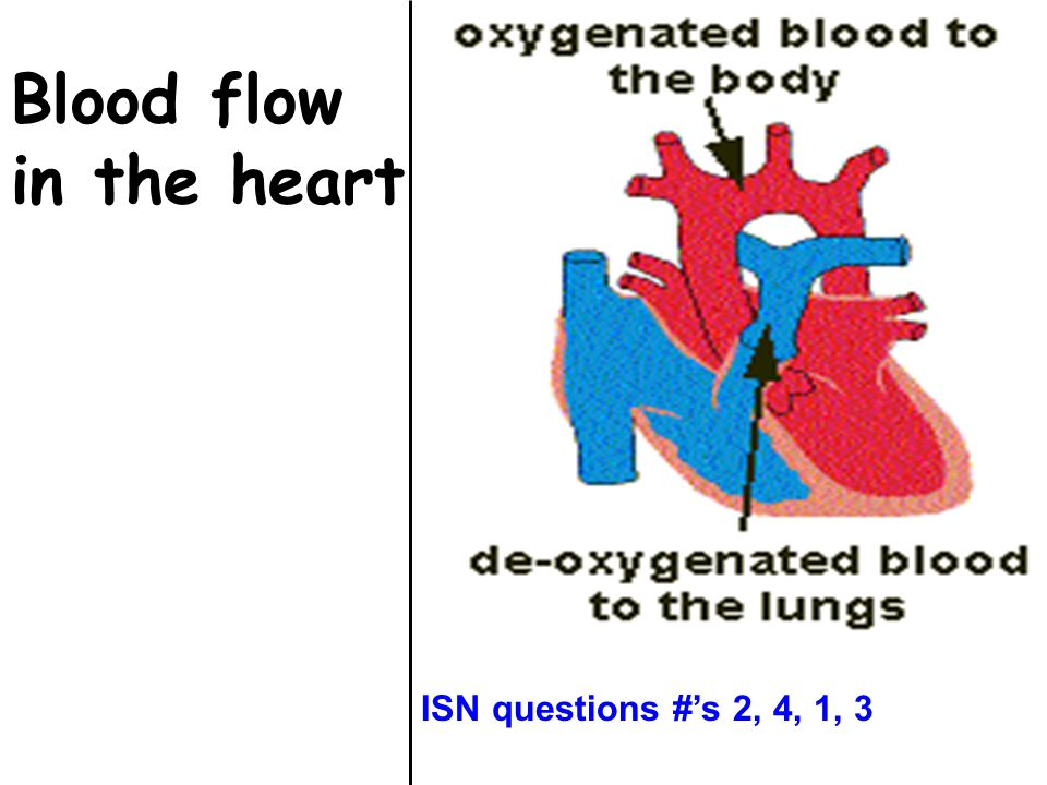 Blood flow in the heart ISN questions #'s 2, 4, 1, 3
