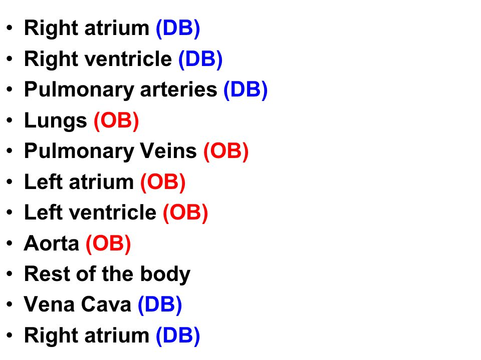 Right atrium (DB) Right ventricle (DB) Pulmonary arteries (DB) Lungs (OB) Pulmonary Veins (OB) Left atrium (OB)