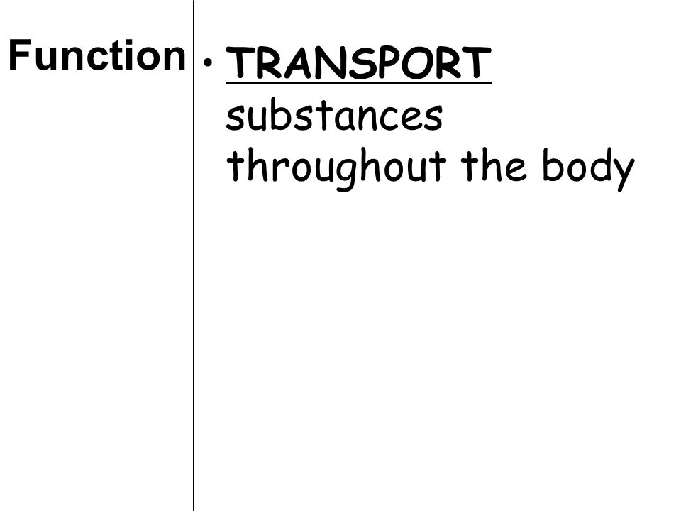 Function TRANSPORT substances throughout the body