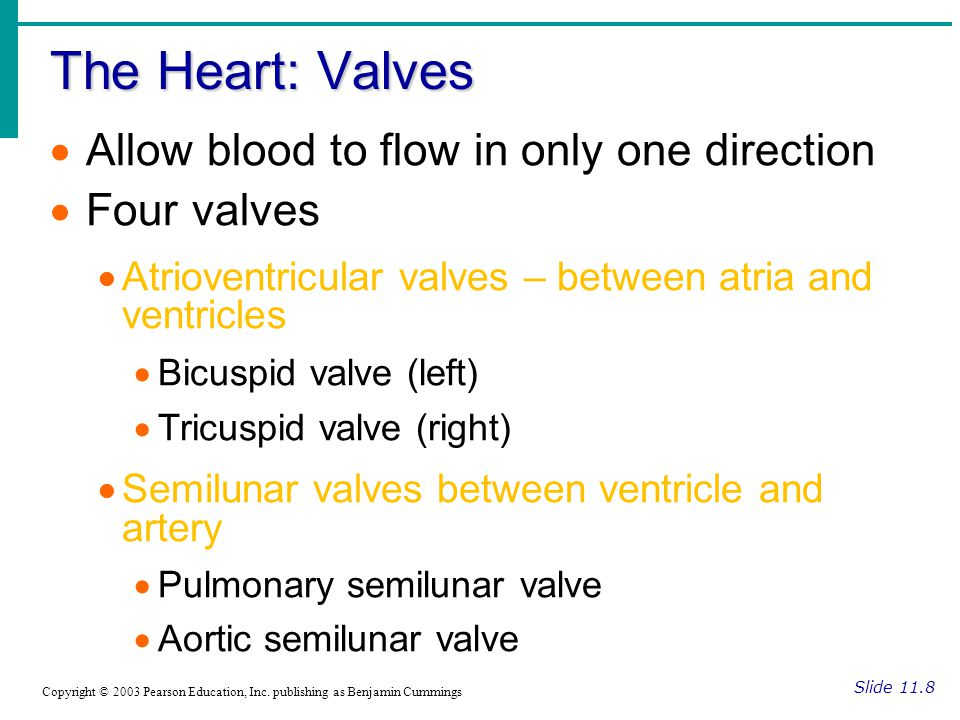 The Heart: Valves Allow blood to flow in only one direction
