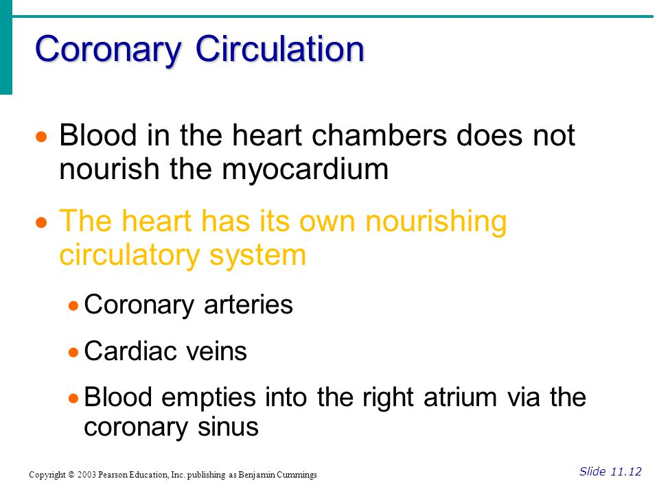 Coronary Circulation Blood in the heart chambers does not nourish the myocardium. The heart has its own nourishing circulatory system.