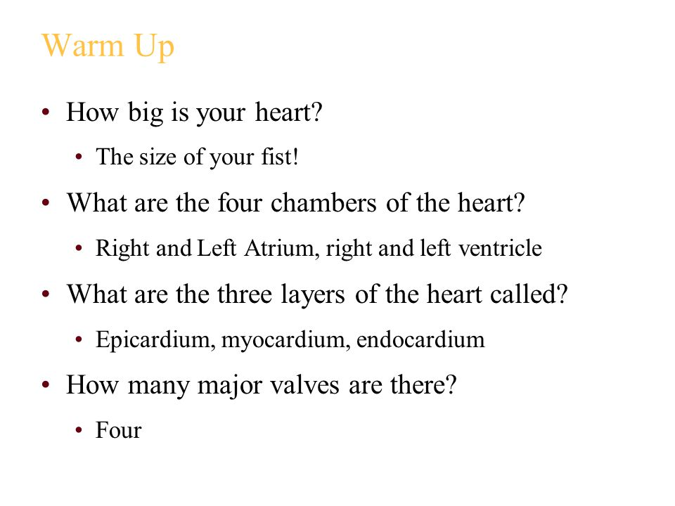 Warm Up How big is your heart