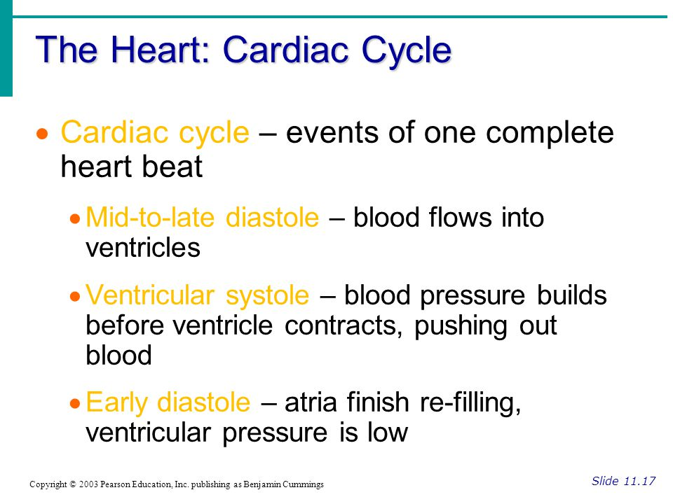 The Heart: Cardiac Cycle