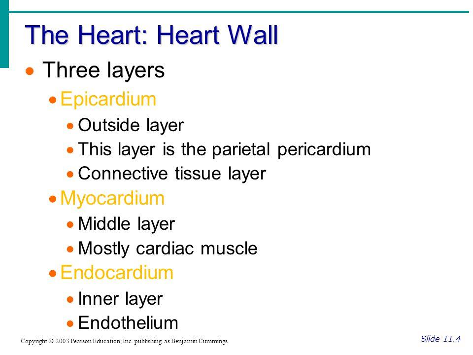 The Heart: Heart Wall Three layers Epicardium Myocardium Endocardium