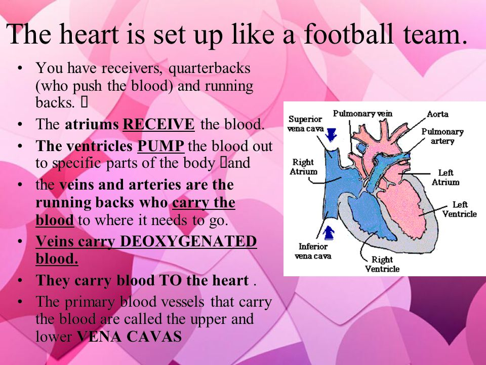 The heart is set up like a football team.