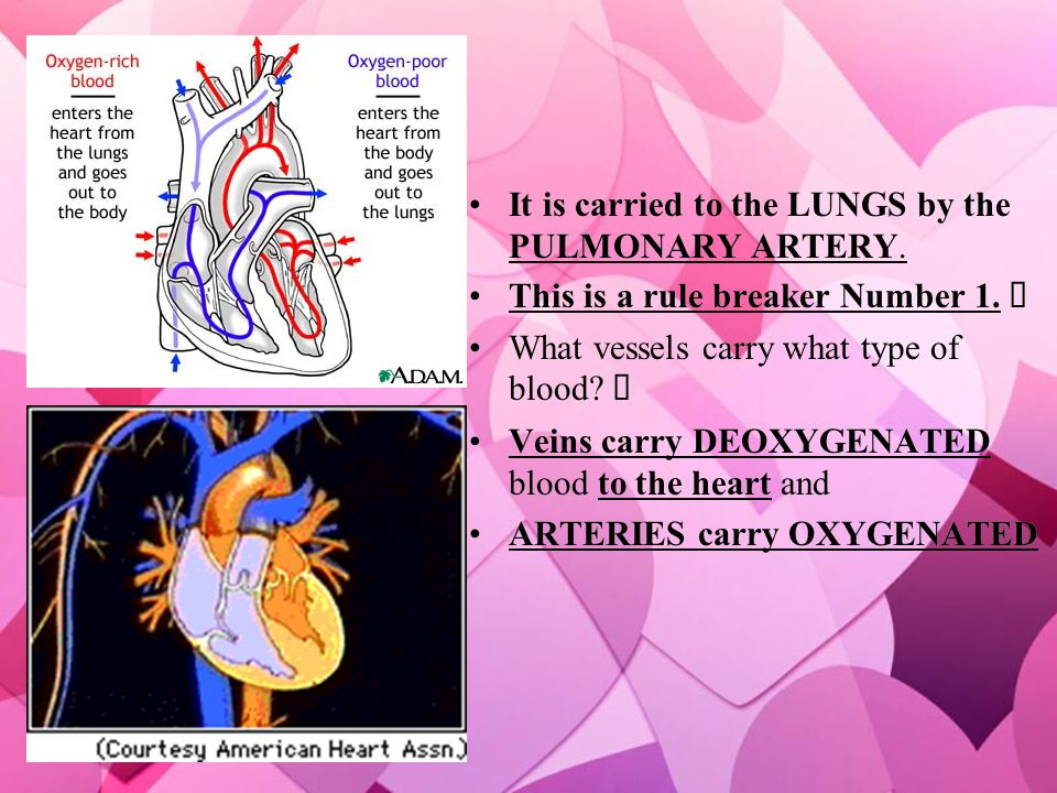 It is carried to the LUNGS by the PULMONARY ARTERY.