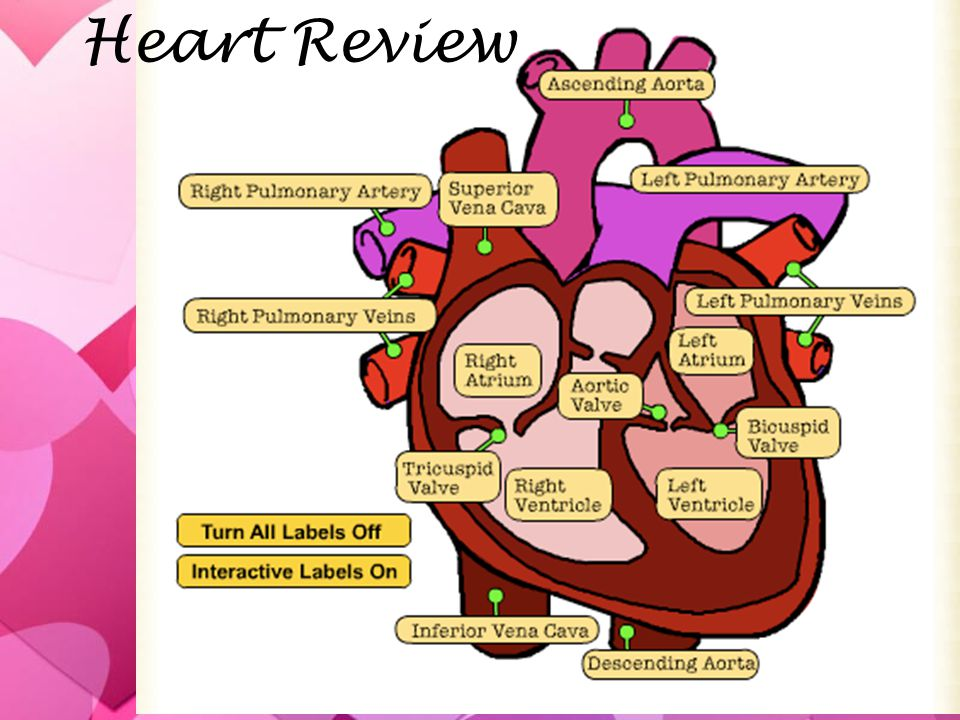 Heart Review