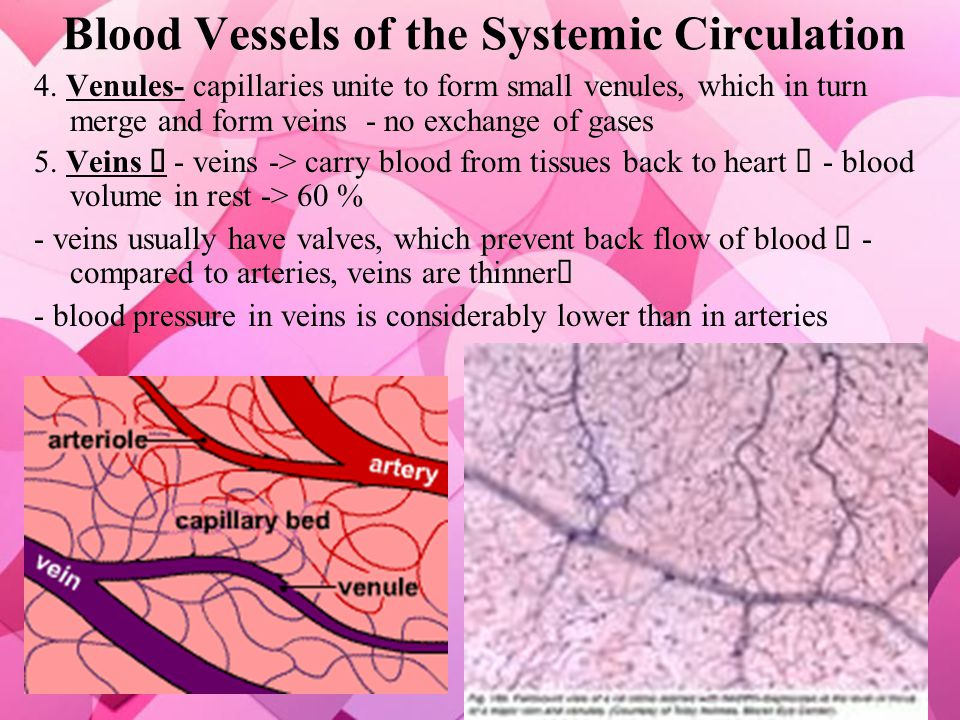 Blood Vessels of the Systemic Circulation