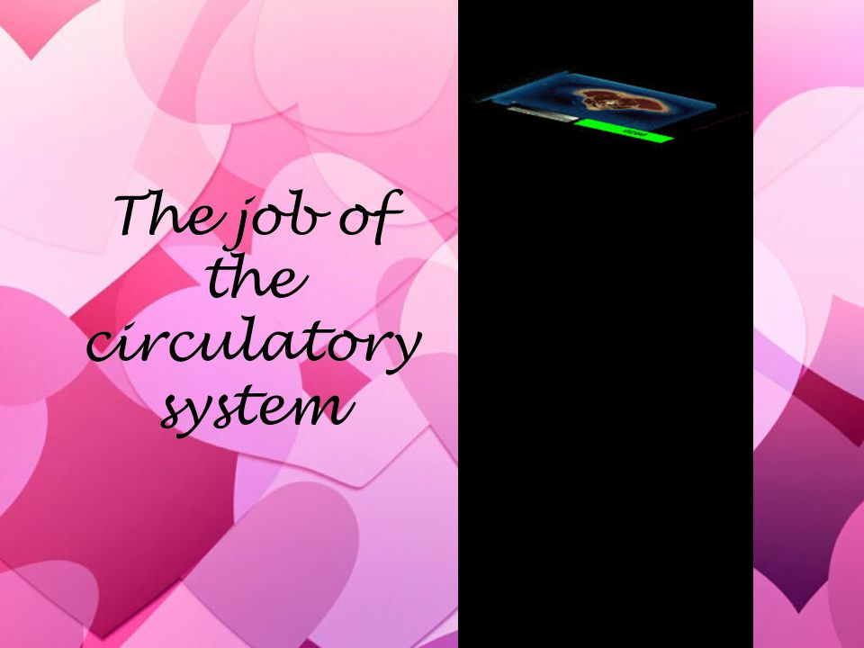 The job of the circulatory system