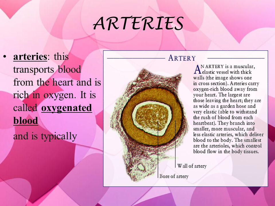 ARTERIES arteries: this transports blood from the heart and is rich in oxygen.
