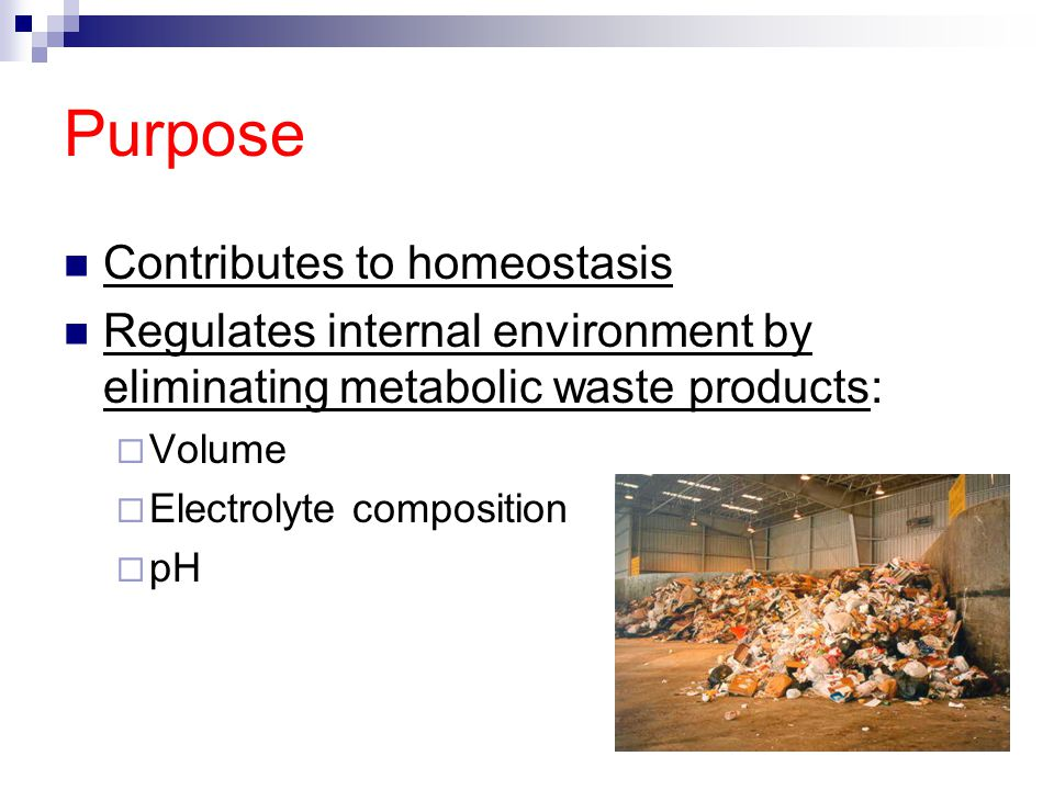 Purpose Contributes to homeostasis
