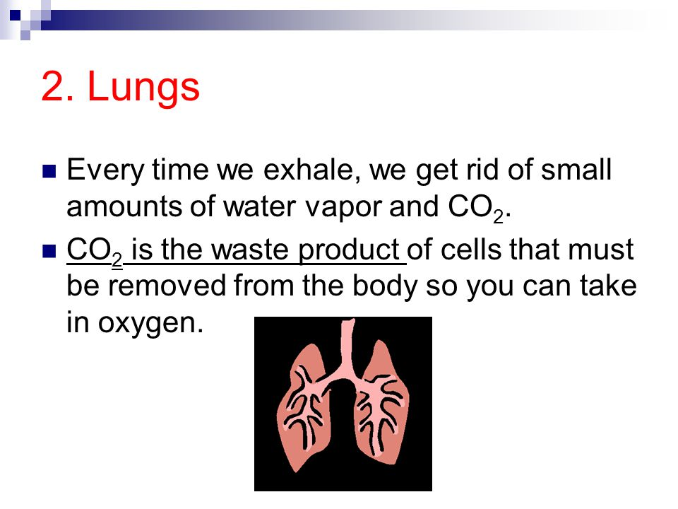 2. Lungs Every time we exhale, we get rid of small amounts of water vapor and CO2.