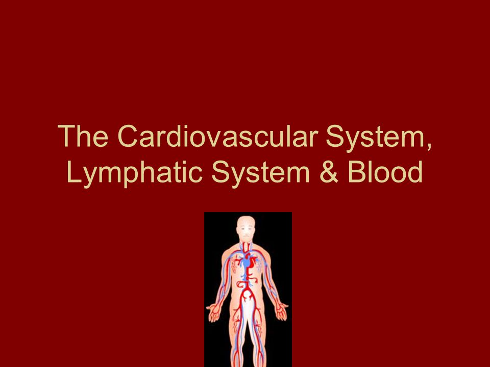 The Cardiovascular System, Lymphatic System & Blood