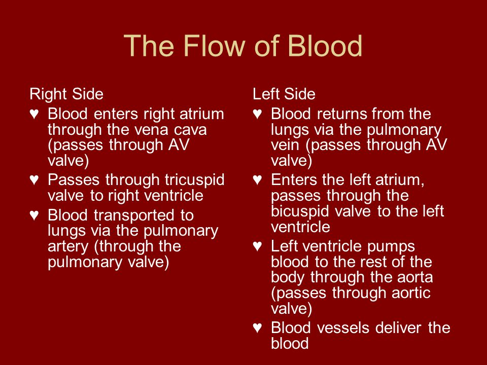 The Flow of Blood Right Side